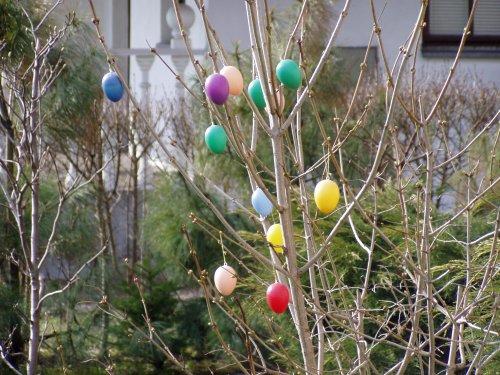 Jajka wielkanocne na drzewach - tradycja niemiecka